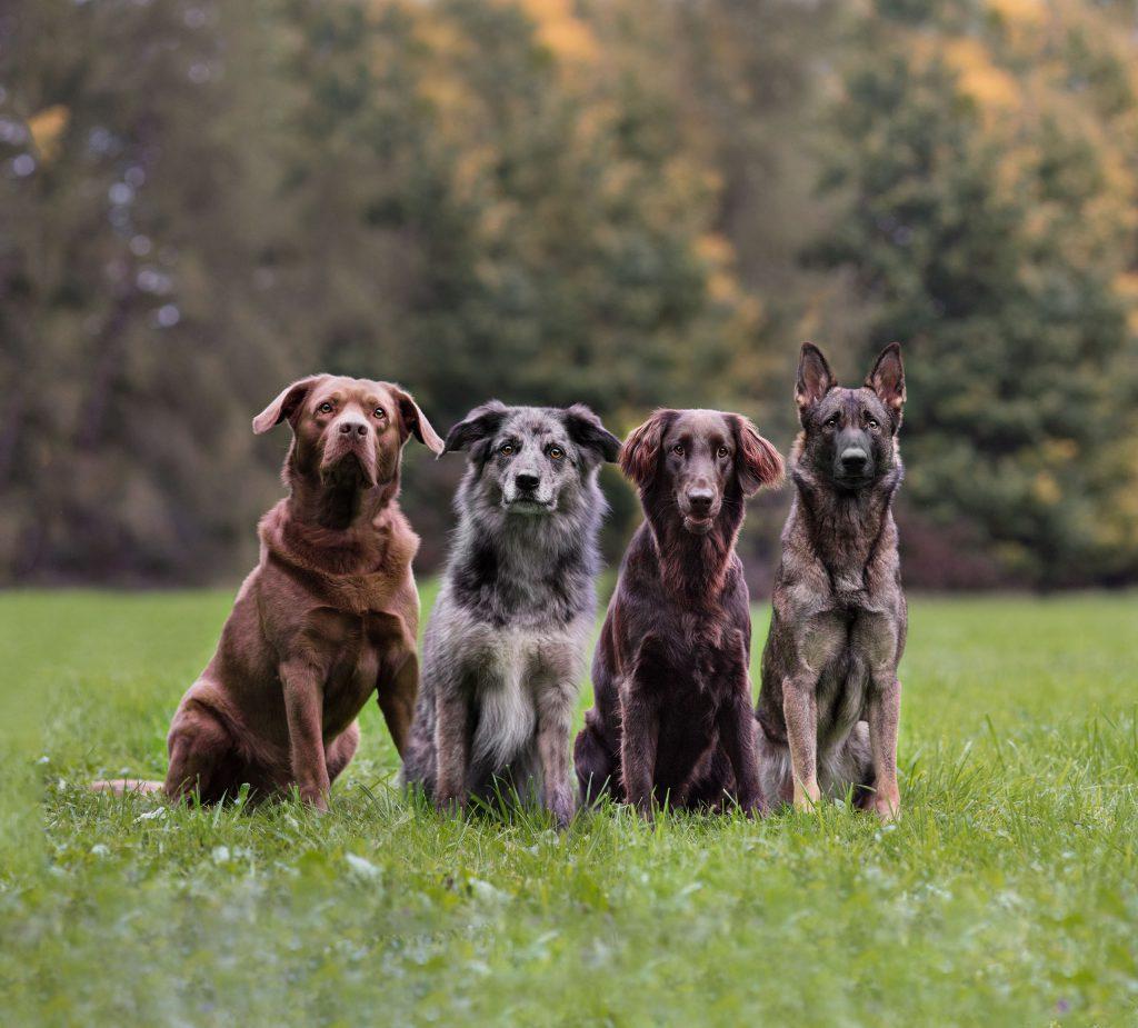 Rettungshunde Verein Günzburg Leipheim